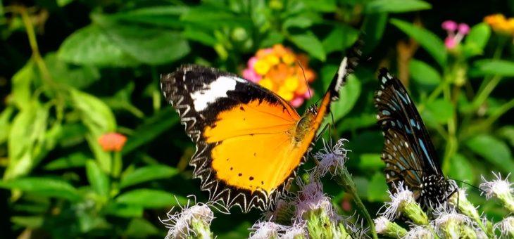 Gaiatrees – Nacht der spirituellen Lieder – ein besonderer Sommerabend