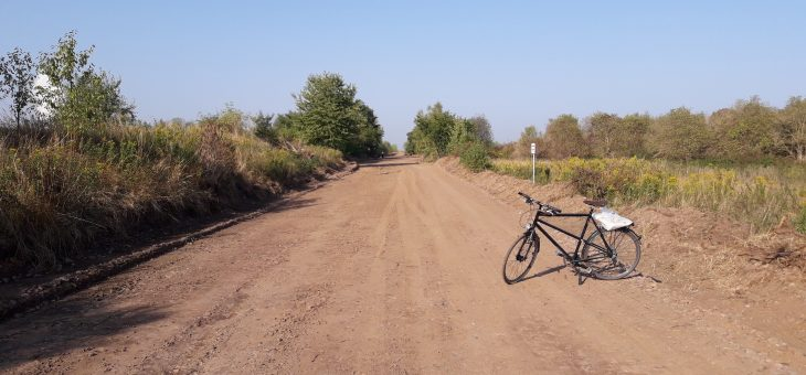 Naturverlust durch Wegeausbau am Störmthaler See