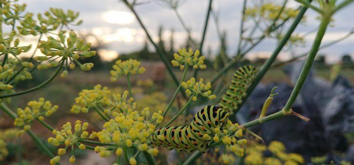 Artenschutz Konkret – Insekten Retten
