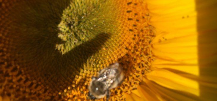 Petition Rettet die Bienen in Sachsen