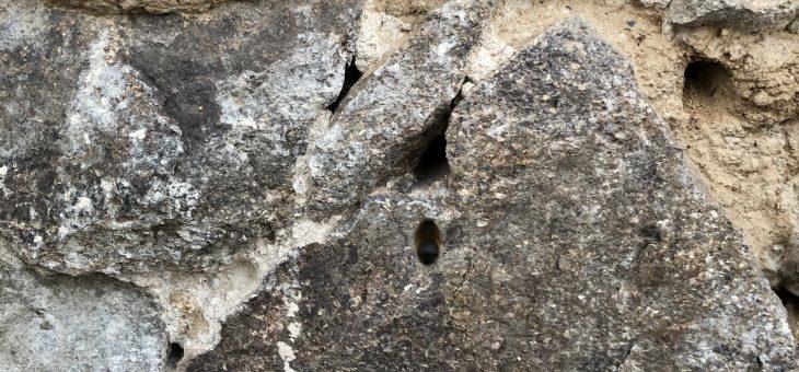 Wider den Trend des globalen Insektensterbens: Marienkäferin im Gasthof Muckern gesichtet!