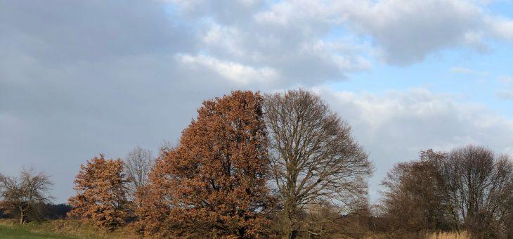 Marzeszenz – Wenn Blätter welken aber nicht fallen