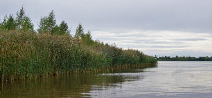 Schilf-Biotop 'Östlich Grunaer Bucht' in Gefahr